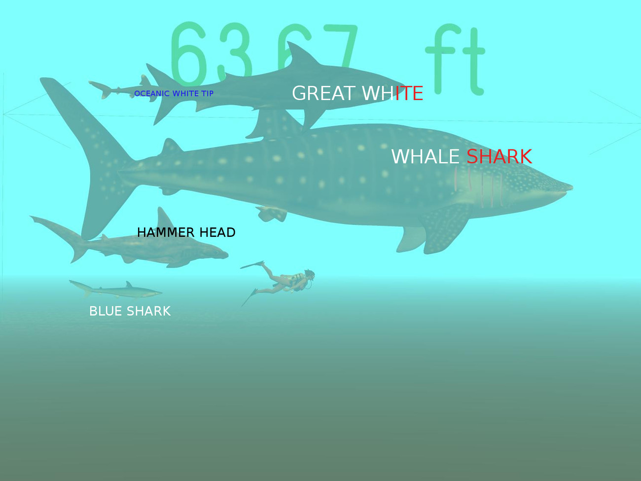 Shark Size Chart by android65mar