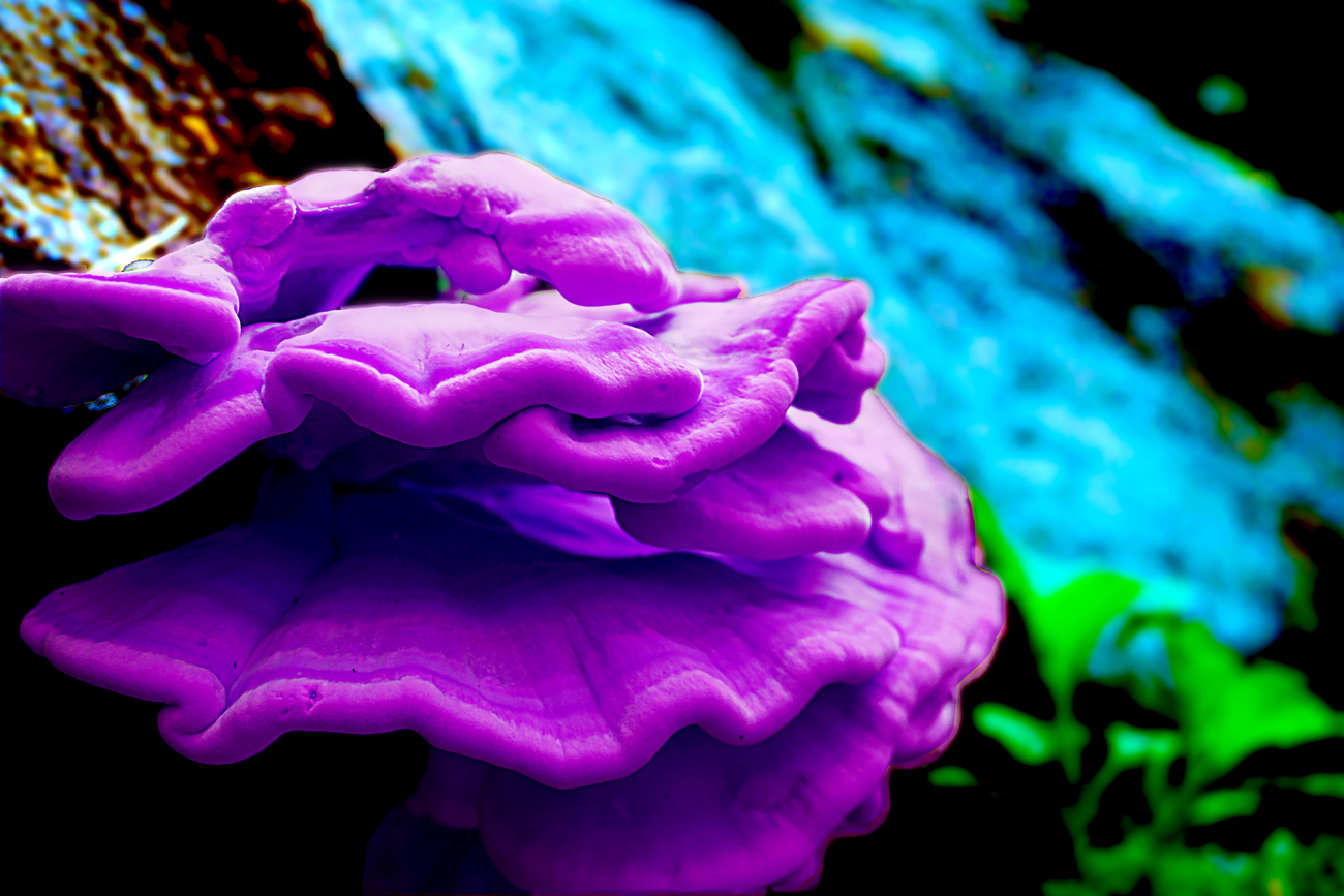 False Color Bracket Fungus by ModuleOne