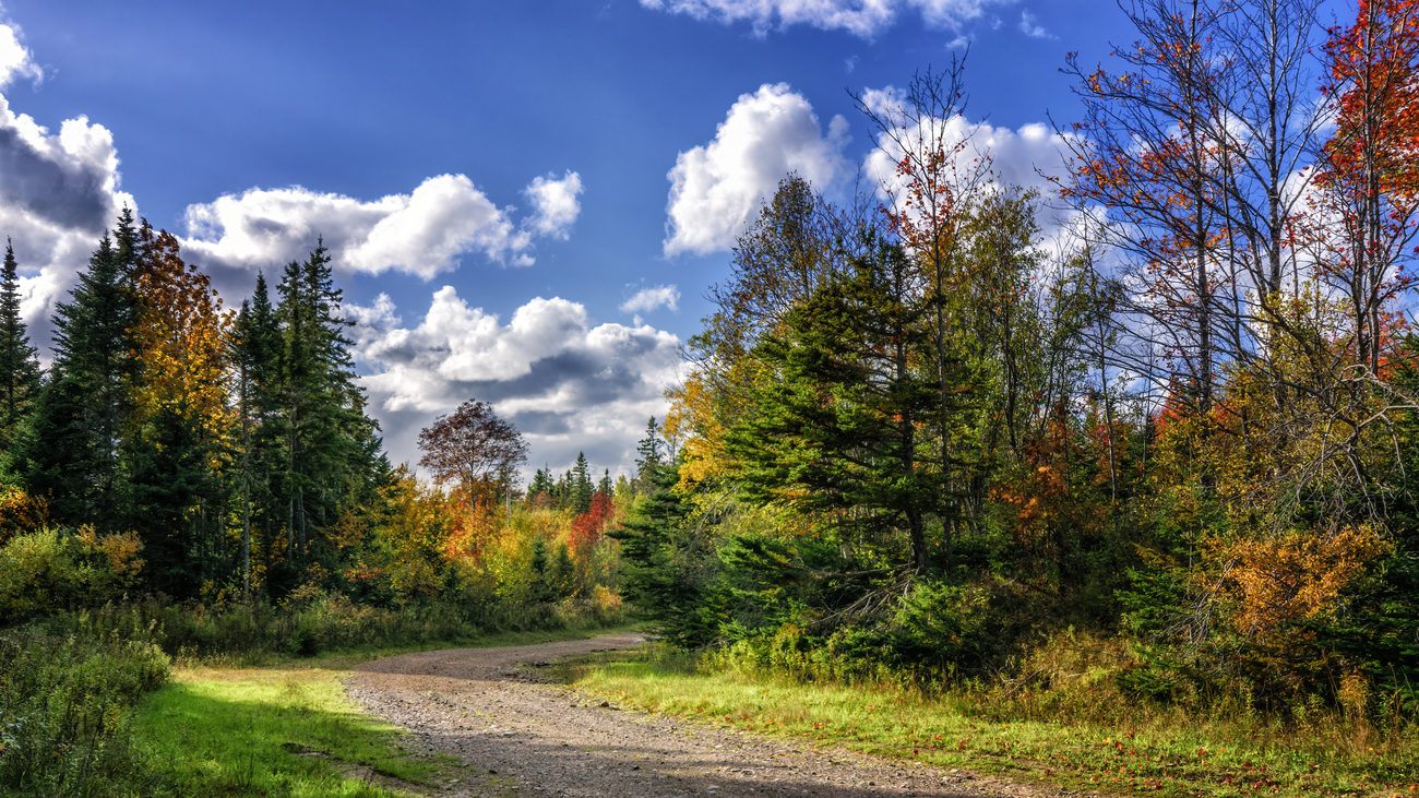 Dirt road on a sunny autumn day by kenmo