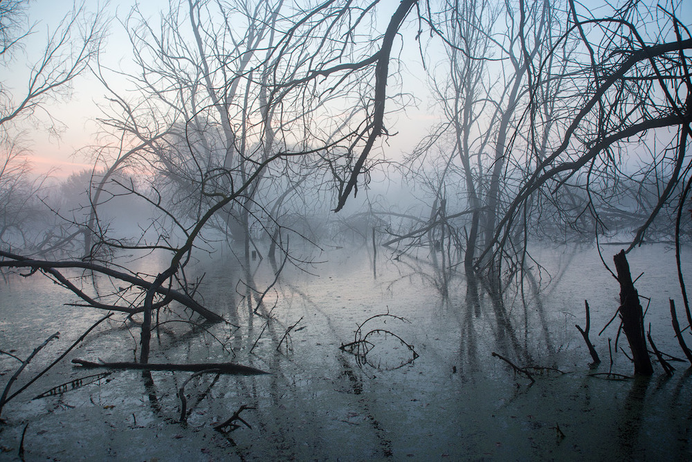 morning in the swamp by 1971s