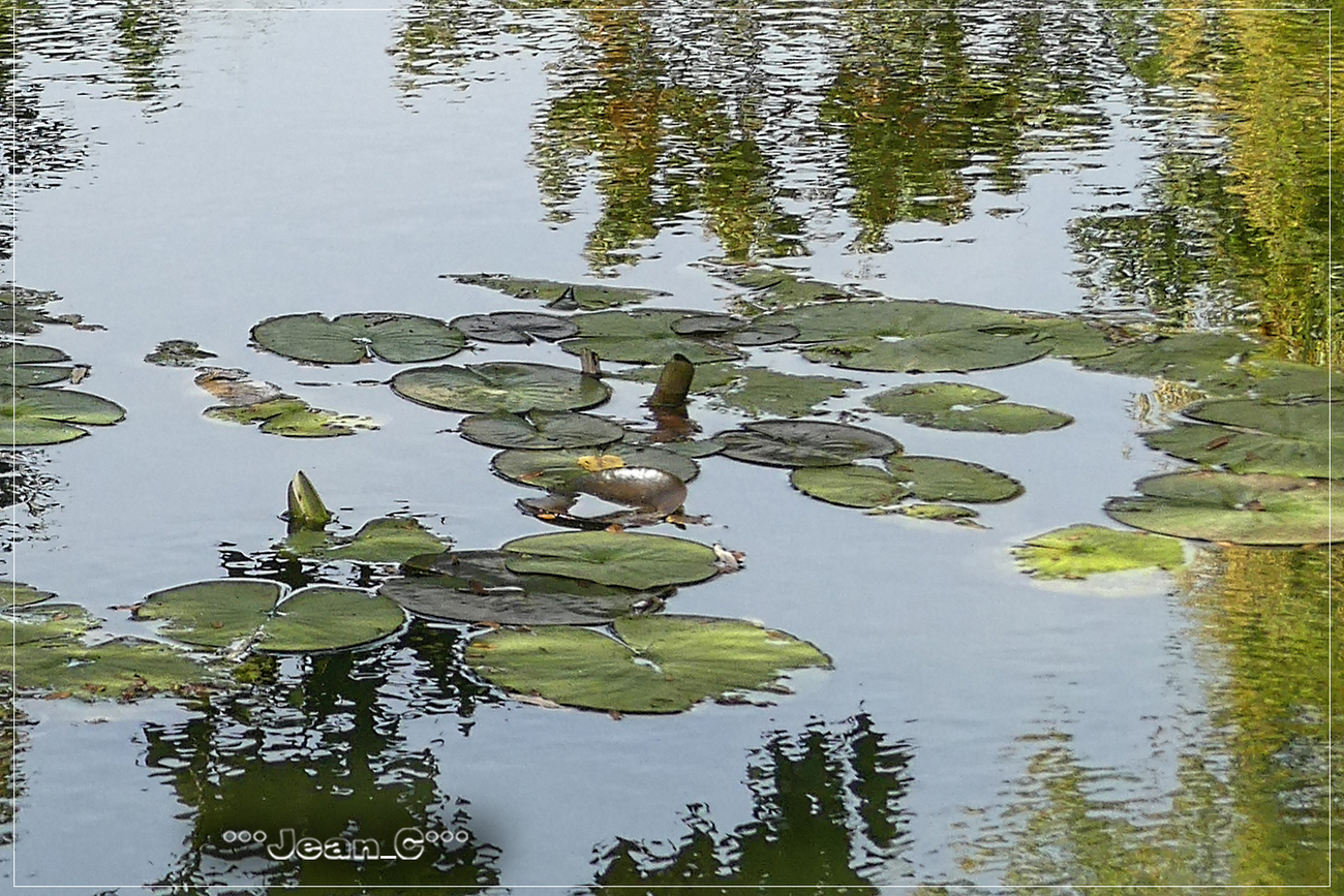 Pond by Jean_C