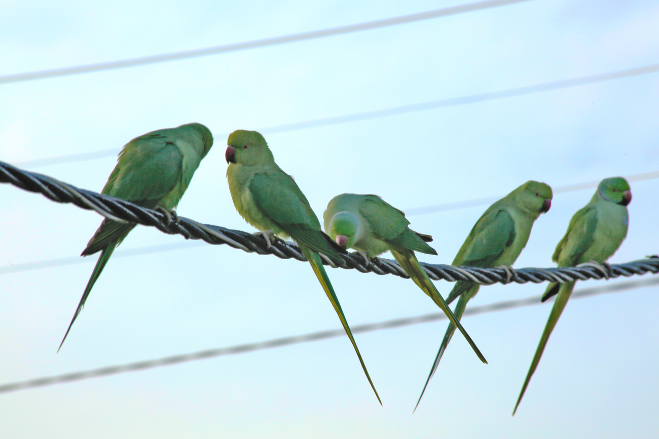Swallows by Parme