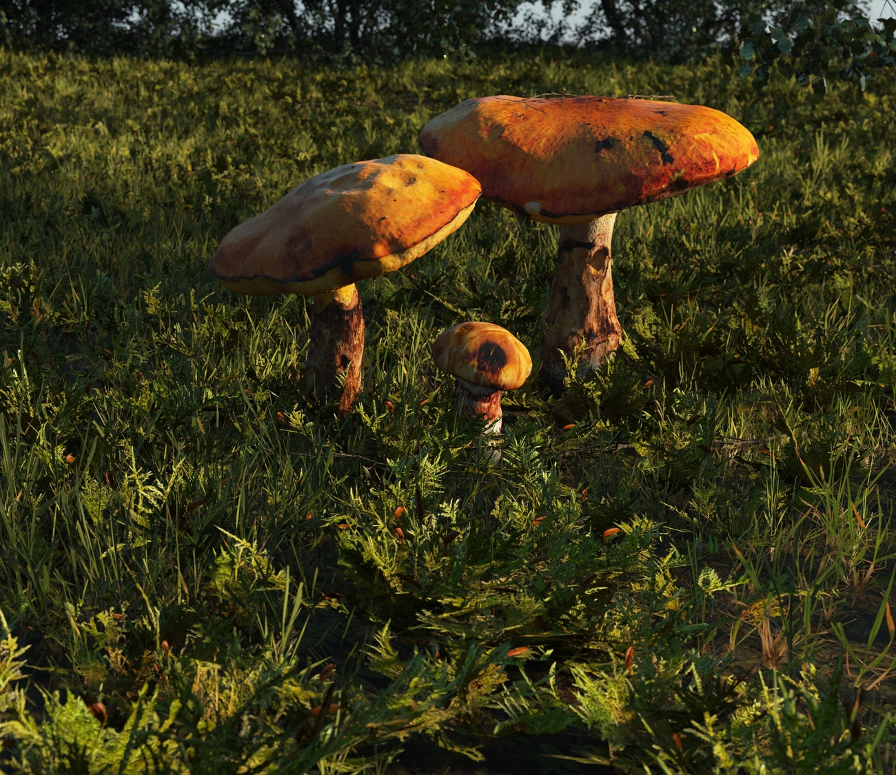 Bolete mushrooms by iborg64