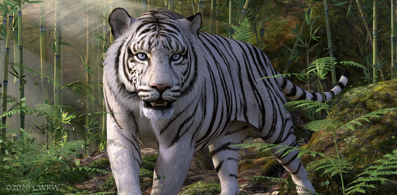 White Tiger by cwrw