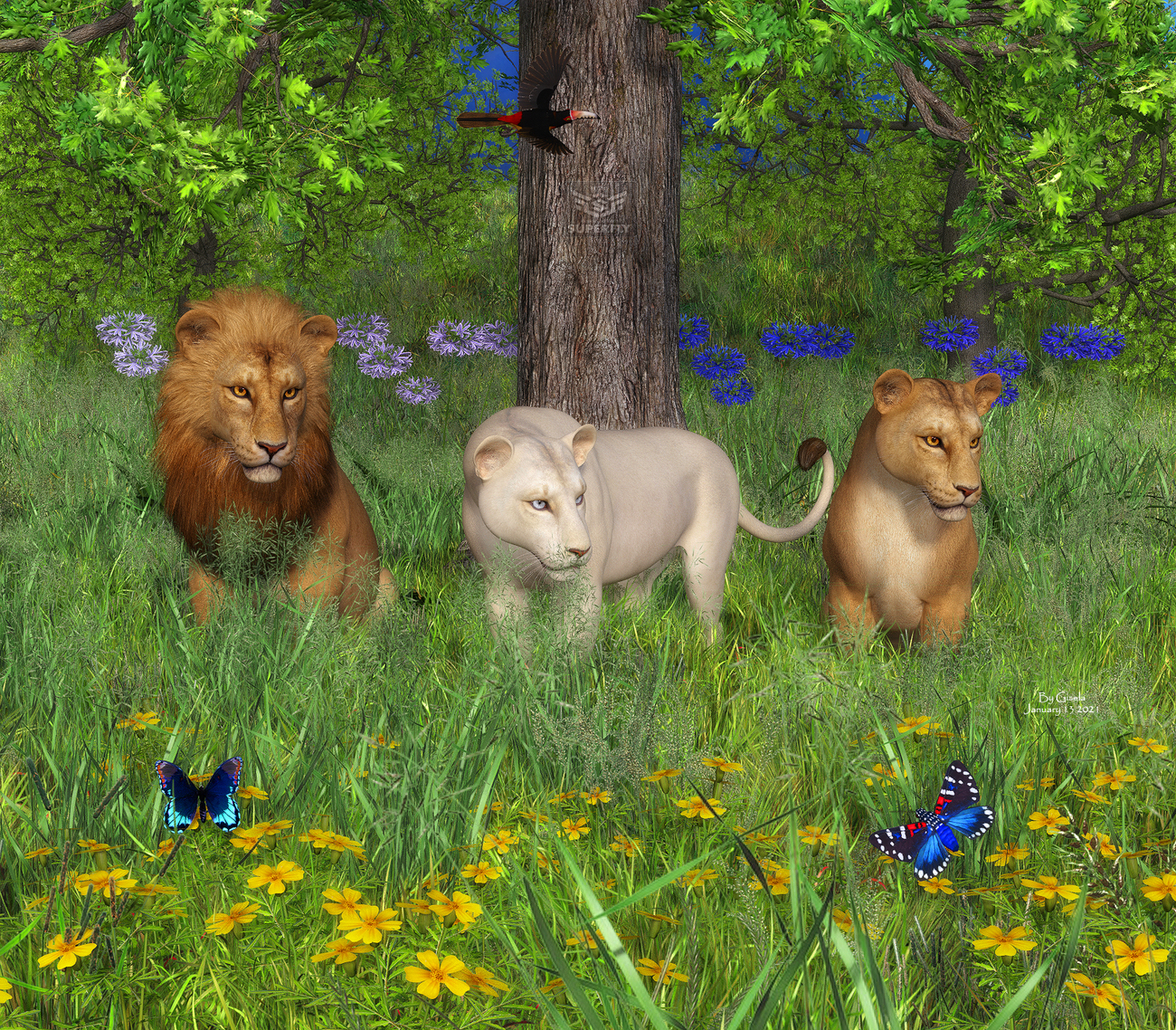 Lions by Gisela