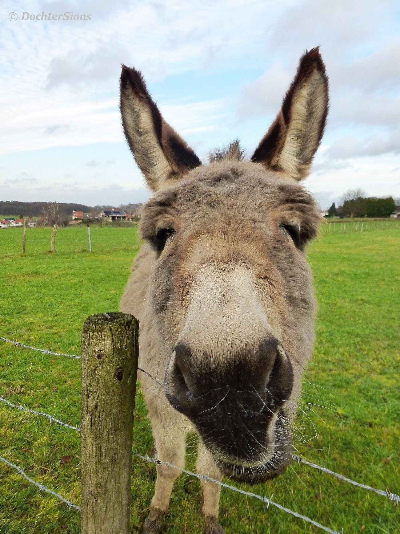 This is Iea, the donkey of Sweikhuizen ;-)