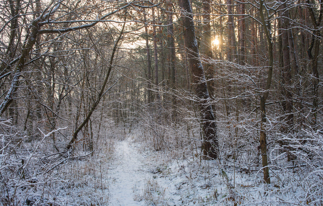 winter forest by 1971s