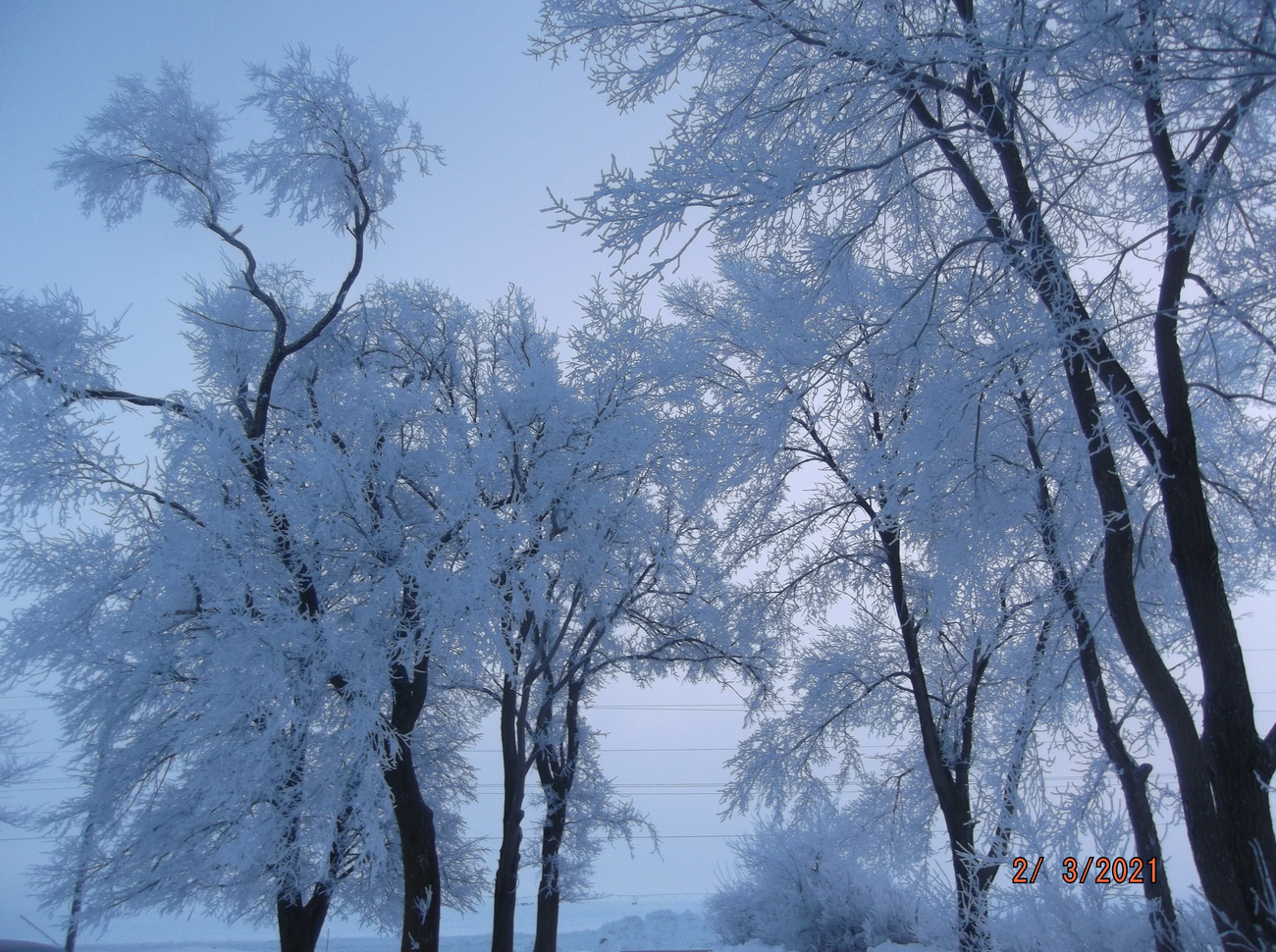 Hoarfrost in the trees