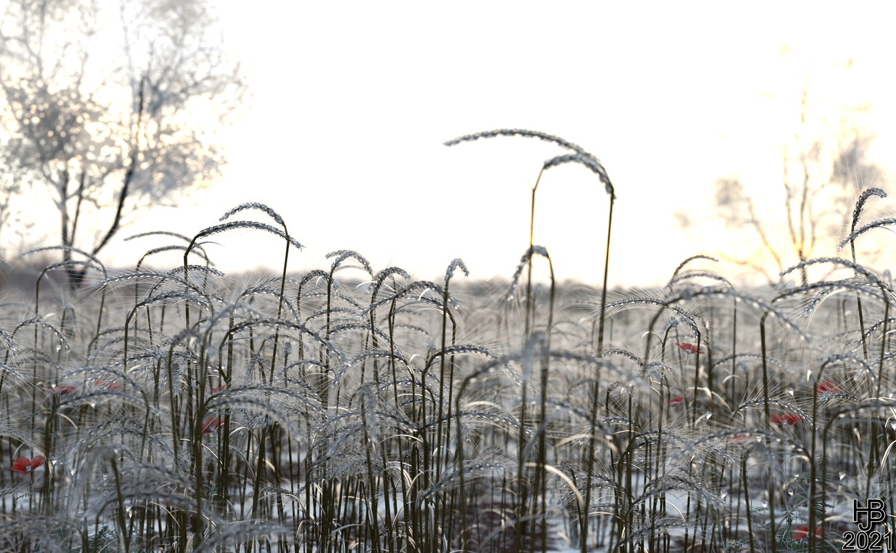 Field of ice flowers by Hajoba