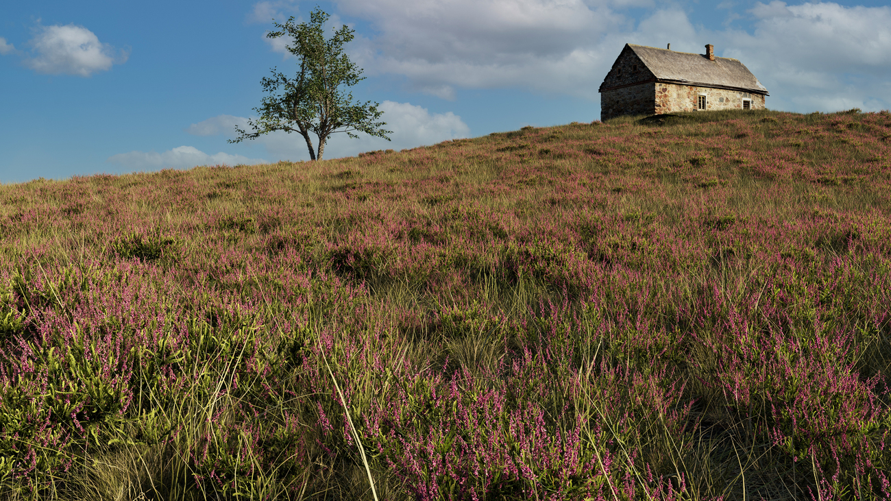The old cottage on the moors