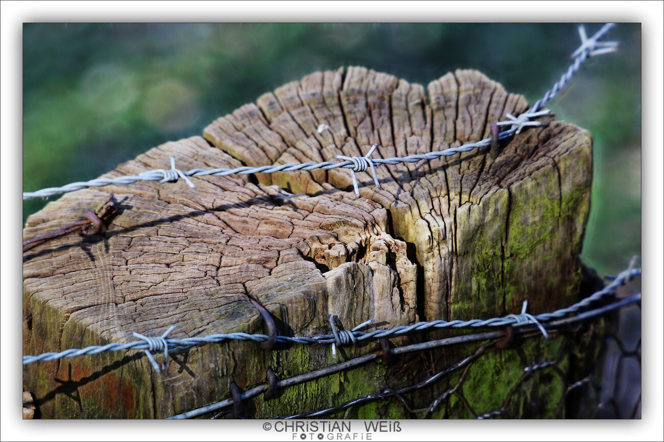 Barbed wire on a wooden pillar
