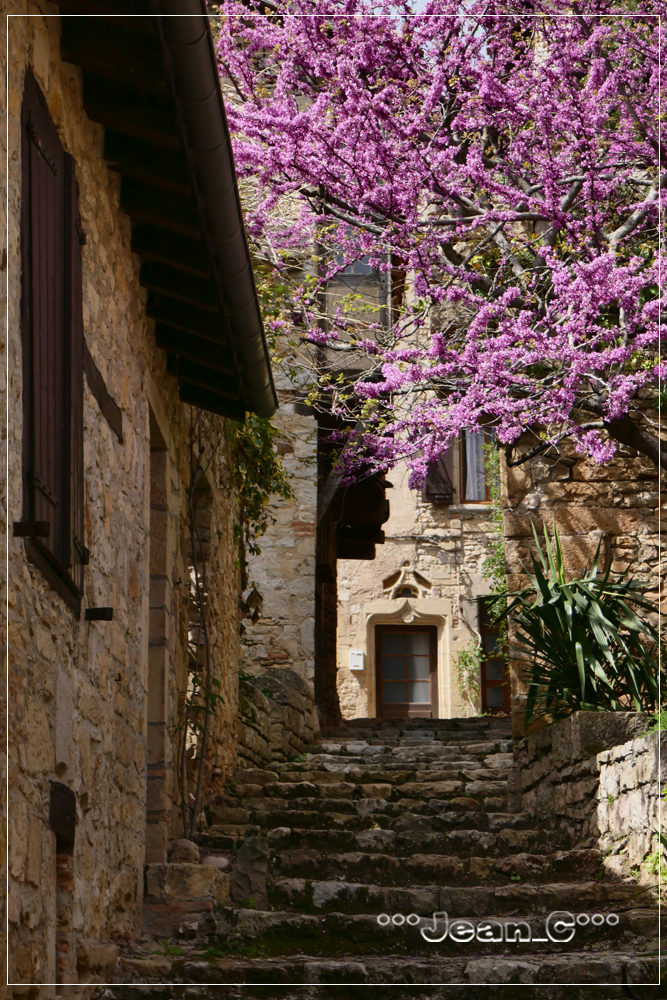 Puycelsi (6): Alley and flowery tree by Jean_C