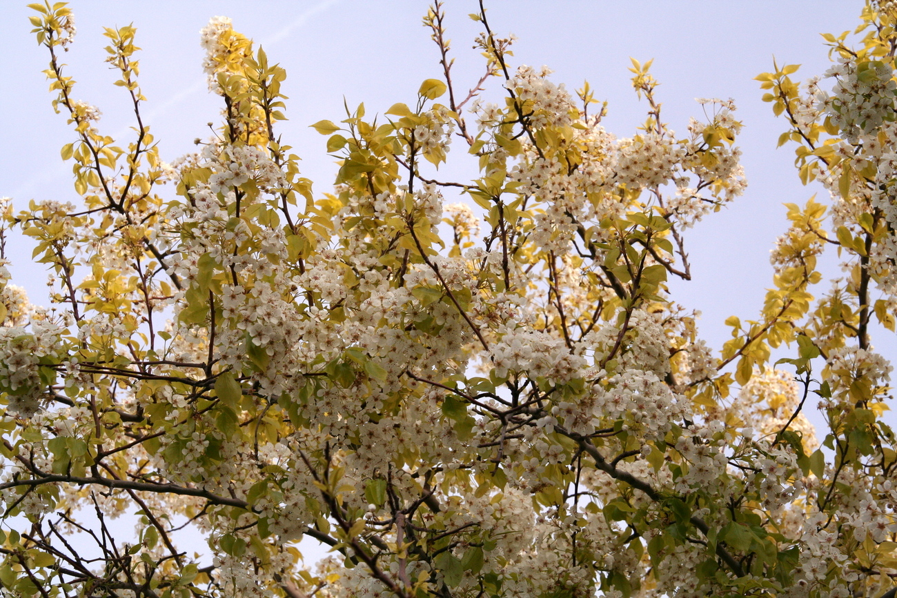 blossoms gone by by Richardphotos