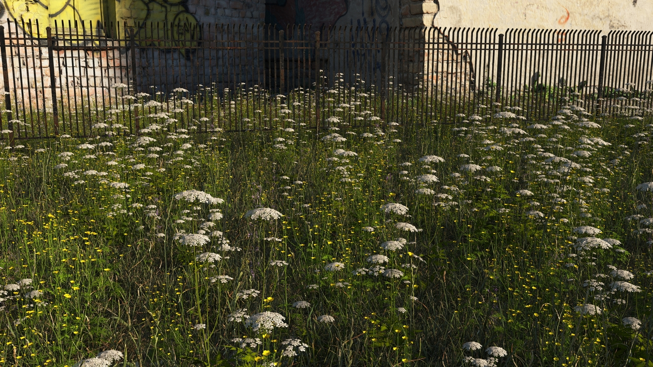 wild flowers by old buildings by iborg64