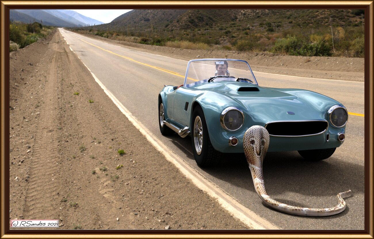 This Car Brakes For Snakes