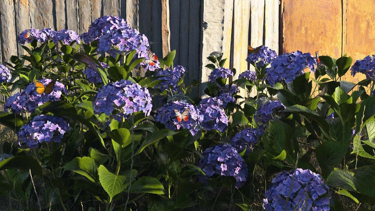 Hydrangea with butterflies by iborg64