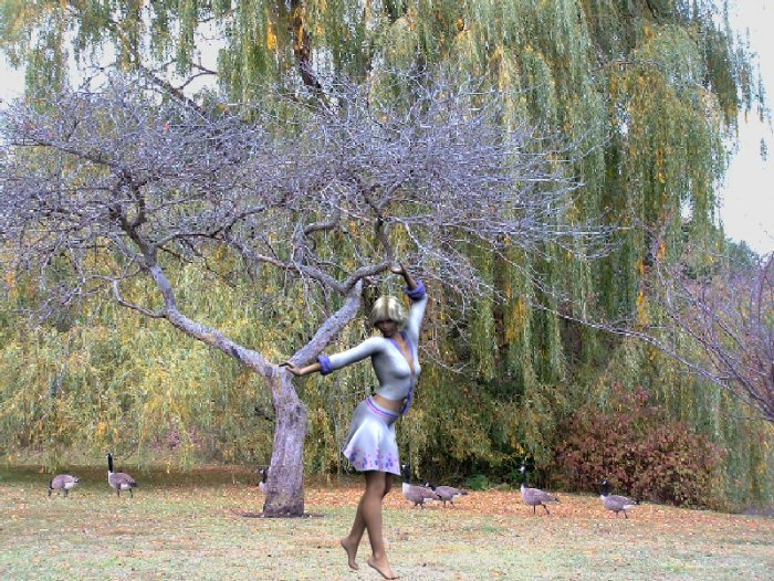 Dancing with Geese